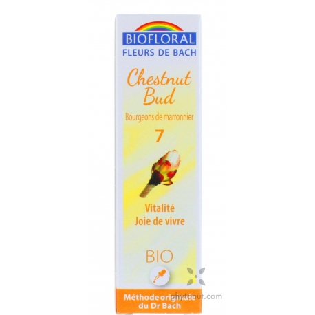 Marronnier bourgeons (Chestnut Bud)