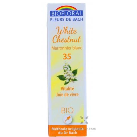 Marronnier blanc (White Chestnut)