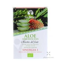 Aloe arborescens sinergia 1