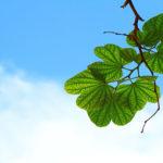 Les 3 cures en naturopathie