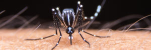 protections naturelles contre les moustiques
