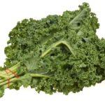 Chou frisé, un des aliments les plus riches en vitamine K.